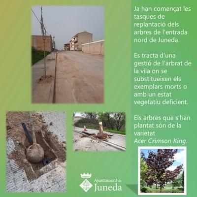 Substitució d'arbres al c/Prat de la Riba